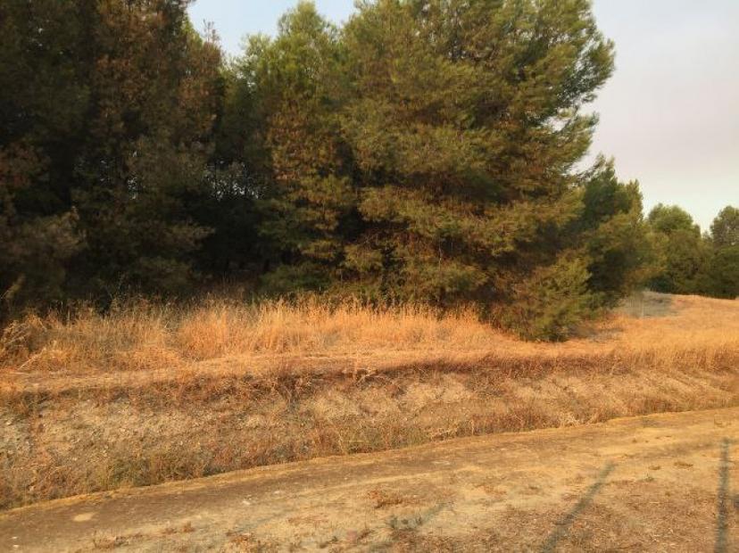 Santiponce: Alertamos del riesgo de incendio en el Conjunto Arqueológico de Itálica
